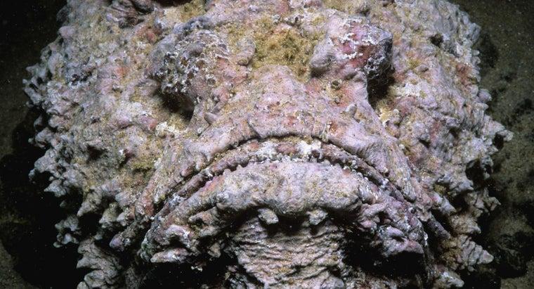 poisonous-fish-world