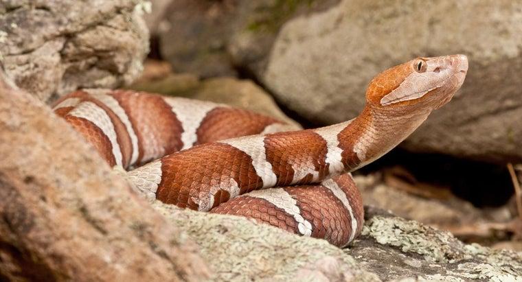 poisonous-snakes-missouri
