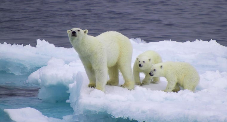 polar-bear-s-ecological-niche
