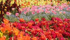 What Is the Most Popular Flower?