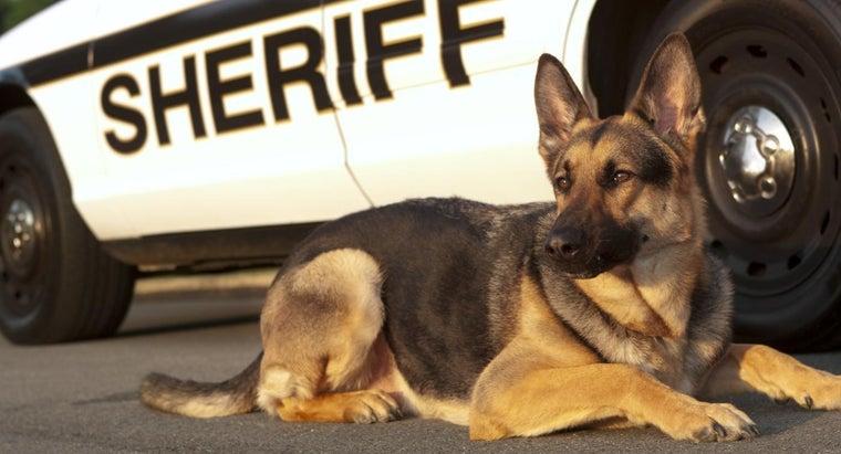 popular-names-police-dogs