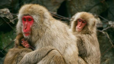 What Is the Population of Monkeys on the Planet?