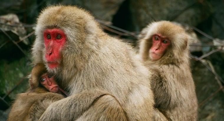 population-monkeys-planet