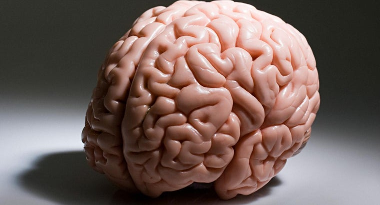 portion-brain-responsible-higher-thought-processes-such-logical-thinking