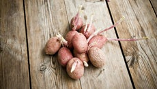 Why Do Potatoes Grow Sprouts?