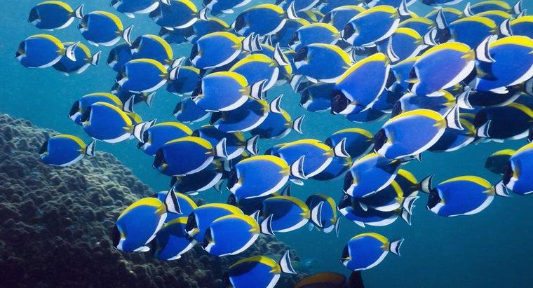 many-fish-sea