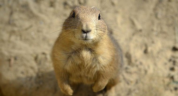 prairie-dogs-endangered