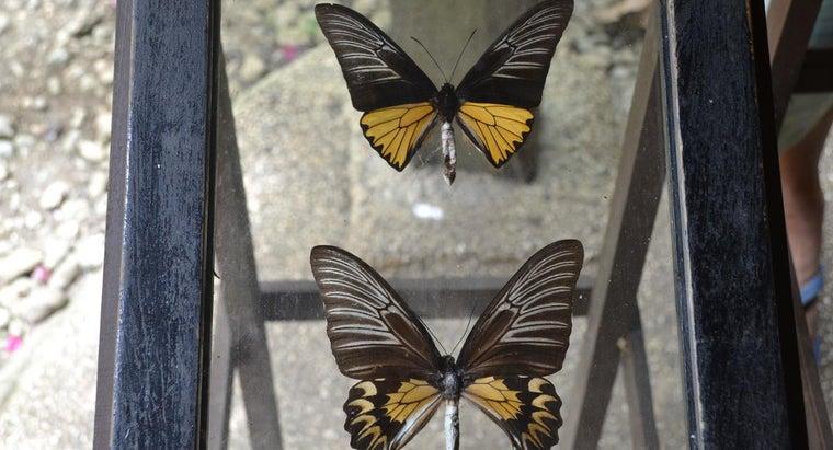 preserve-butterfly