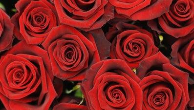 How Do You Preserve a Rose?