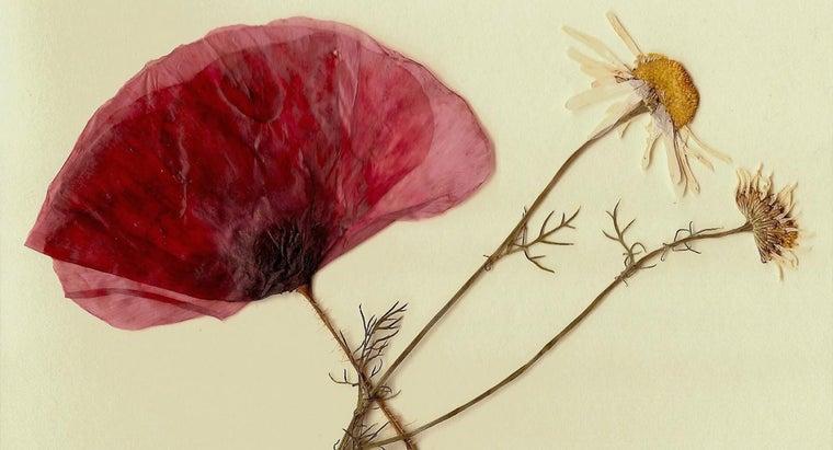 press-flowers-wax-paper
