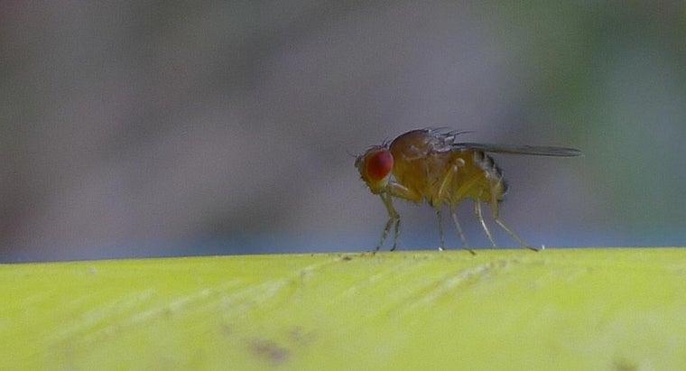 prevent-fruit-flies