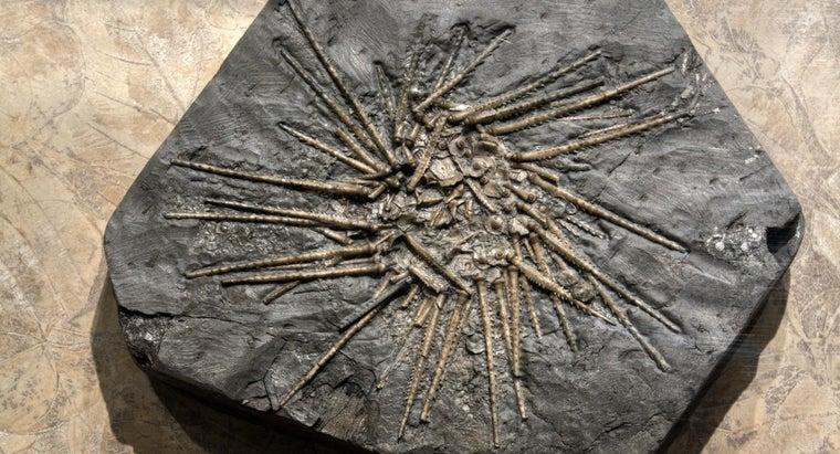 principle-fossil-succession