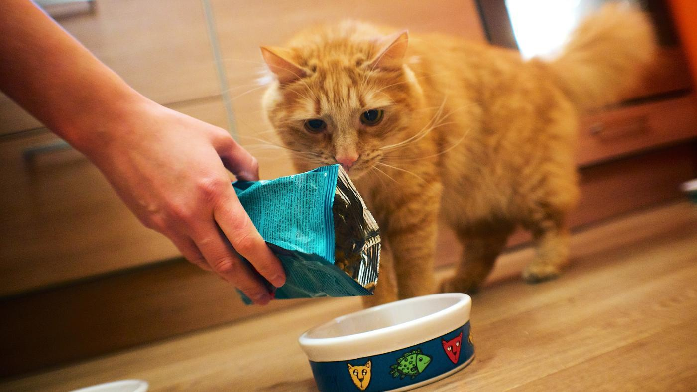 photo about Printable Cat Food Coupons titled What Are Printable Purina Cat Food items Coupon codes?