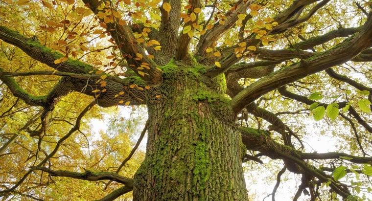 properties-oak