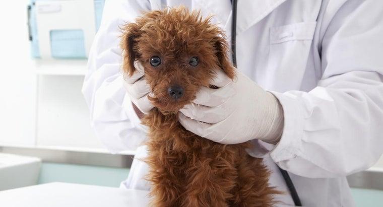 puppies-first-shots