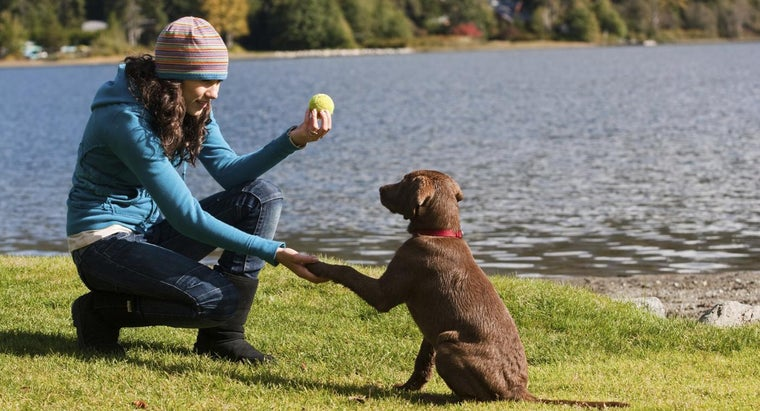 puppy-obedience-training