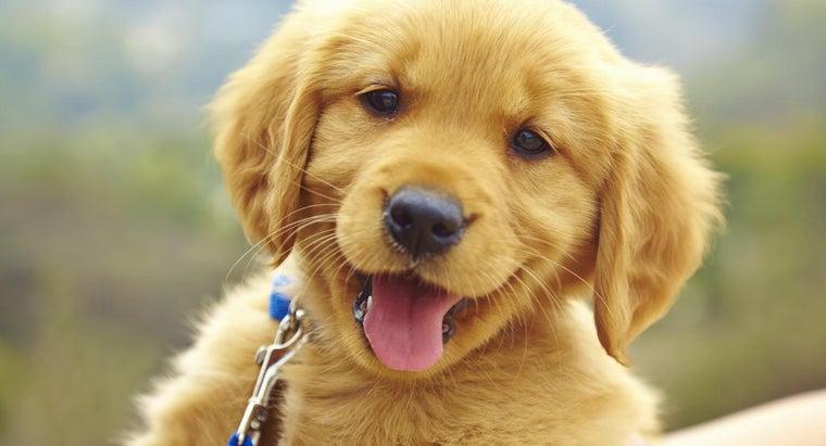 puppy-shots-timeline