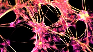 What Is the Purpose of the Central Nervous System?