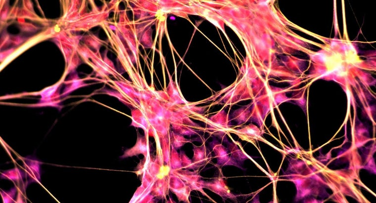 purpose-central-nervous-system