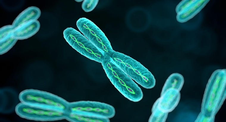 purpose-chromosomes