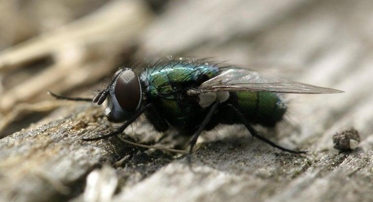 purpose-fly