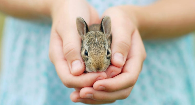 rabbit-appropriate-kids
