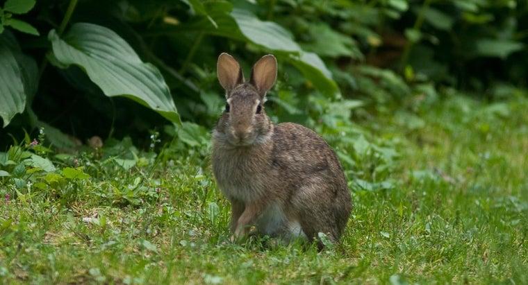 rabbits-adapted-habitat
