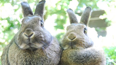 Are Rabbits Herbivores?