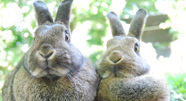rabbits-herbivores