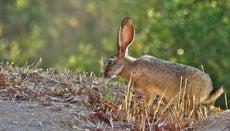 Where Do Rabbits Live?