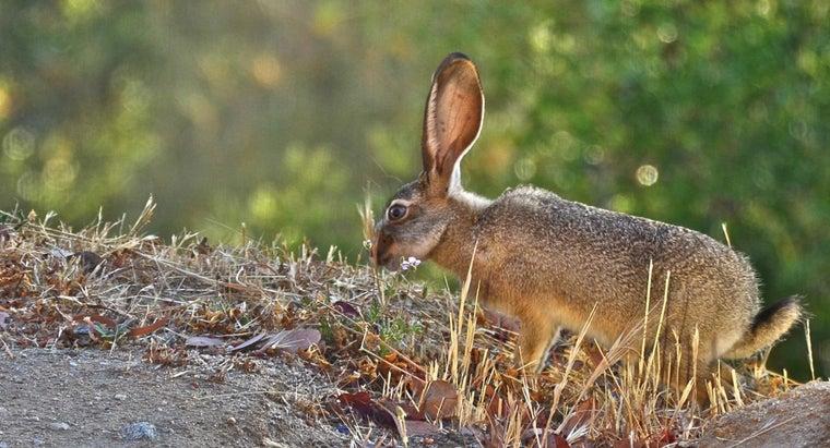 rabbits-live