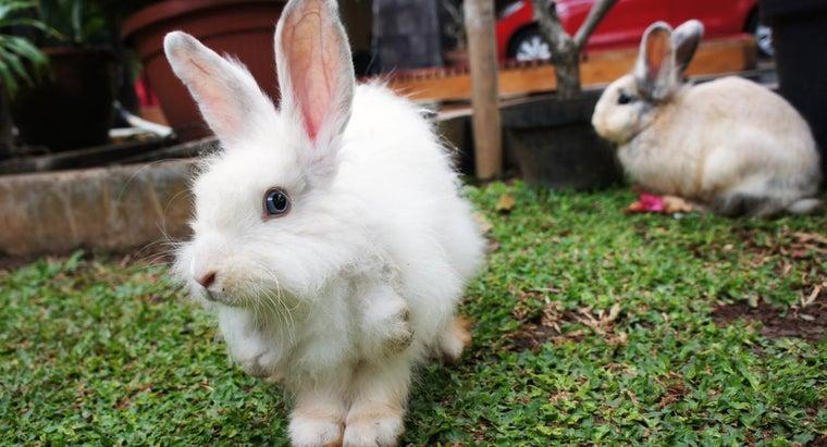 rabbits-mate