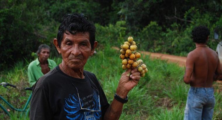 rainforest-tribes-eat