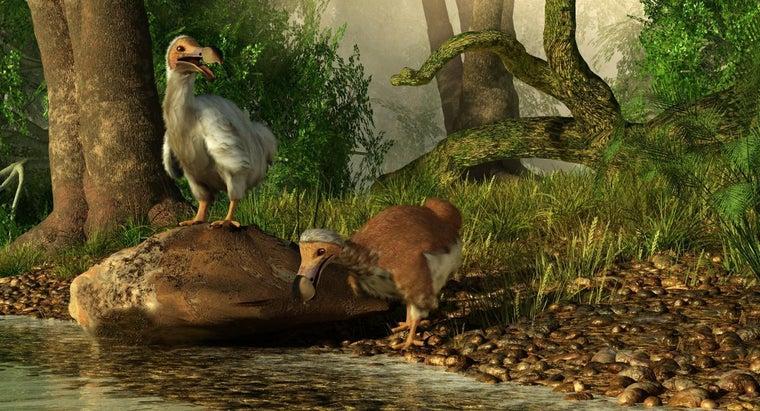 rarest-animals-world