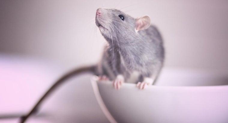 rat-poison