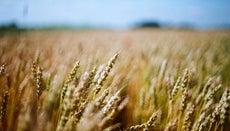 How Do You Recognize a Gluten Allergy?