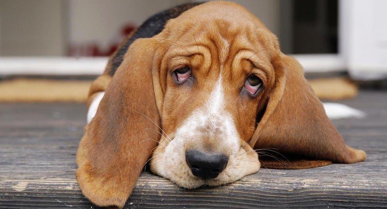 recommended-ibuprofen-dosage-dogs