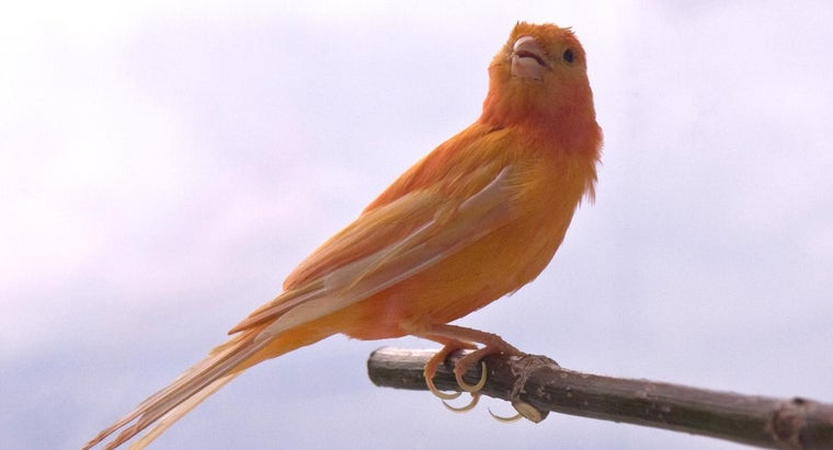red-factor-canary