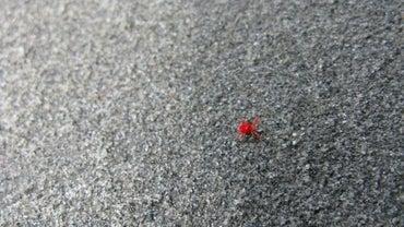 Do Red Spider Mites Bite Humans?