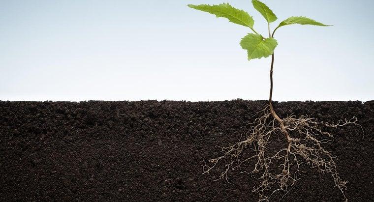 region-plant-root-mitotic-activity
