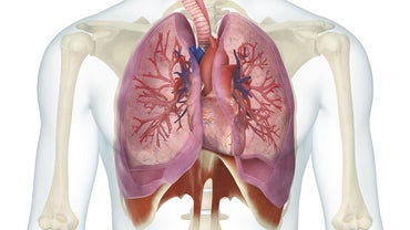 What Is the Relationship Between the Heart and the Lungs?