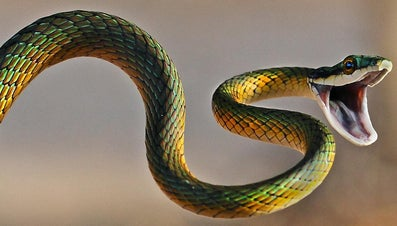 What Is the Relationship Between Scorpios and Snakes?