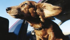 How Do You Relieve Dog Skin Allergies?