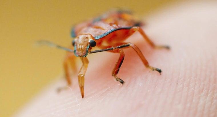 remedy-bug-bites