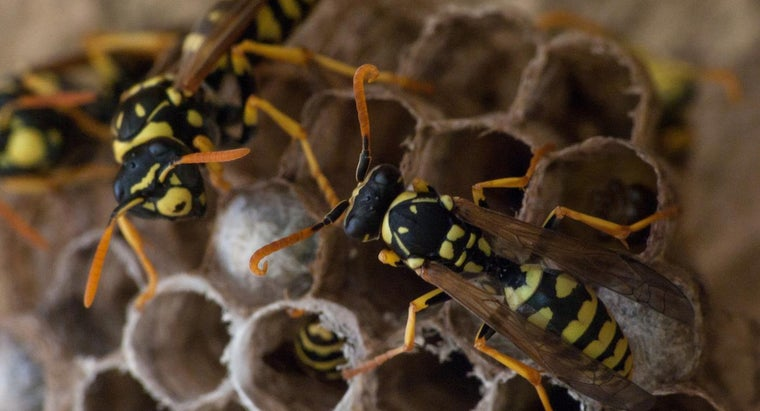 remove-wasp-nest