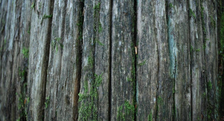 removing-bark-kill-tree