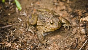 How Do You Repel Toads?