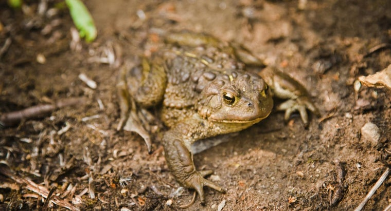 repel-toads