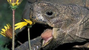 How Do Reptiles Obtain Food?