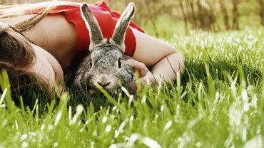 What Are Some Reputable Pet Stores That Sell Rabbits?